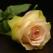 Crema de trandafiri cu mure