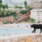 Top 7 destinații perfecte pentru iubitorii de pisici