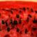 Pepenele rosu, remediu delicios pentru o detoxifiere intensa