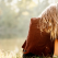 Cele 7 obiceiuri ale oamenilor in care poti avea incredere