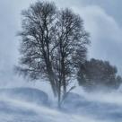 Mihai Eminescu: Când crivățul cu iarna...