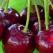 Ciresele - fructele verii. Care sunt beneficiile lor extraordinare?