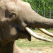 Acesti elefantei sunt pur si simplu adorabiliiiii. Ce crezi ca fac cand aud sunetul viorii?