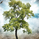 Inclinatia naturala a omului este optimismul sau depresia?