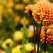 Amenajarea gradinii pentru toamna cu flori decorative