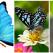 Frumuseți cu aripi rare: Top 13 cei mai frumoși fluturi ai lumii