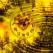 Horoscop 2011: barfe astrologice din viitor