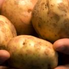 Povestea cartofilor urat mirositori: De ce este bine sa iertam?