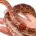 Serpii, animale de companie exotice