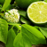 Lime: De ce e bine sa consumi lamai verzi