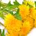 Papadia - leacul de aur pentru multe boli