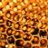 Pastura, mai valoroasa decat polenul