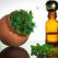 Uleiul de oregano - beneficii si proprietati speciale