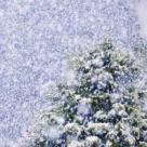 Cele mai frumoase cantece romanesti despre iarna