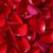 Trandafir de post