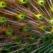 Despre teoria uimitoare a fractalilor din natura