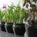 Plante de interior ce purifica aerul
