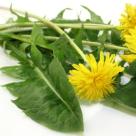Papadie, verde cu magie! 10 beneficii puternice ale consumului de frunze de papadie