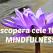 Cele 10 LEGI MINDFULNESS