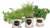 Set 3 ghivece pentru plante aromatice
