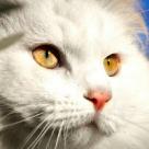 Pisici: 10 imagini cu pisici