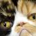 Top 3 Cele mai ciudate pisici celebre de pe intreg internetul!