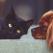 Cum să-ți hrănești sănătos câinele sau pisica: un ghid pentru începători