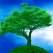 TEST: Afla care este Arborele personal al Vietii!