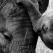 Ce se intampla cand ii canti unui elefant? Este ataaat de frumos si emotionant!