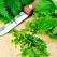 Urzicile sunt alimentul Postului Mare: Beneficii nemaipomenite pentru sanatate si alimentatie!