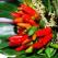 Ardeiul iute, planta decorativa si terapie picanta