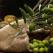 Dieta calugarilor de pe muntele Athos - Descopera o dieta divin de sanatoasa!