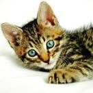 Pisicutele si micile dezastre din casa