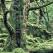 Astrologia Celtica si izvoarele intelepciunii infinite: Ce personalitate arboricola sacra ai?