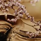 Top 10 cele mai frumoase poezii romanesti cantate