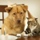 Sarcina si animalele de companie