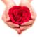 (P) Revitalizeaza-ti corpul cu cosmeticele din trandafir marocan