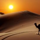 Testul Cladirii din Desert - un test extraordinar de psihologie relationala