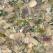 Reteta de post: Ciuperci umplute