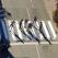 STOP victimelor pe trecerile de pieton! Zebra 3D, soluție ingenioasă pentru prevenirea accidentelor