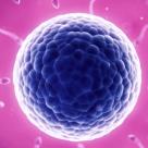 Bolile autoimune: cand propriul sistem imun ataca fertilitatea