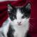 Avantajele cumpărării de la un pet shop online