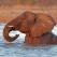 Cel mai fericit elefant din lume!