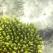 Miracolul din adancuri: algele marine
