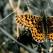 Top 10 LECTII de viata pe care ni le ofera Natura