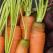 De unde cumparam legume cu gust