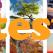 Testul celor 6 copaci de poveste! Afla ce personalitate ai