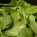 Salata de spanac cu linte