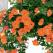 (P) Primavara aceasta, Lidl te ajuta sa-ti cultivi pasiunea pentru gradinarit