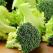Broccoli - superalimentul sanatatii si al detoxifierii! 10+ motive ca sa consumi leguma minune